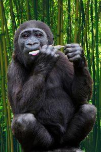 ape spliff