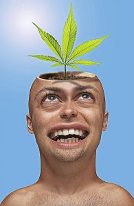 cannabis head